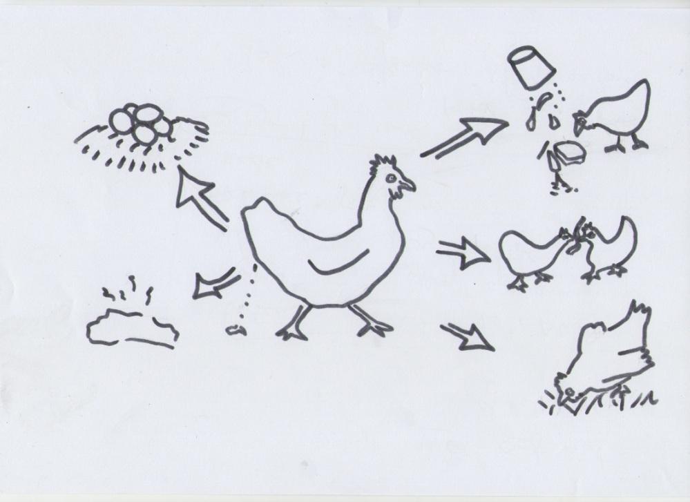 Chicksout