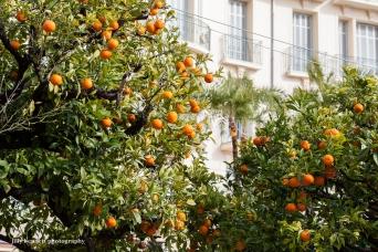 oranges (1 of 1)
